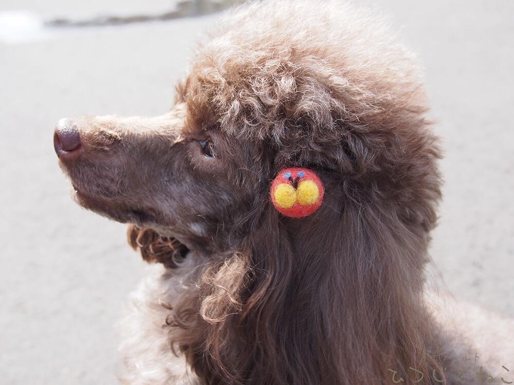 犬のアクセサリー